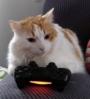 Cat sitting behind a video game controller